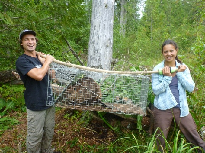 Beaver Relocation