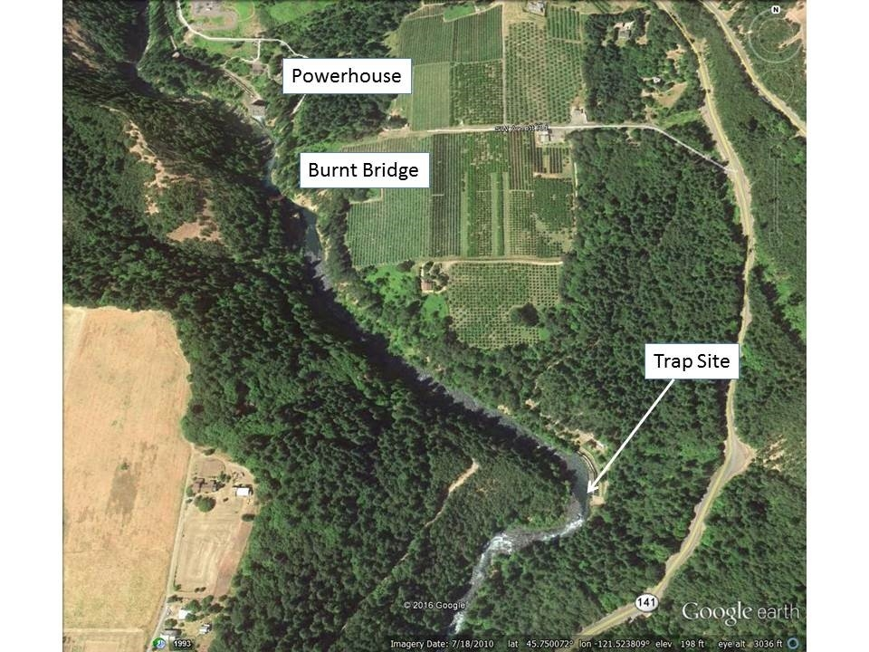 White Salmon Screw Trap Map